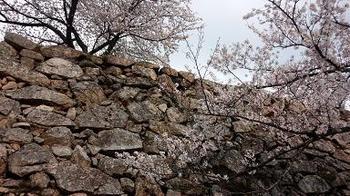 takedajyo2 黒田(岡田)官兵衛をめぐる旅~兵庫編9日本のマチュピチュ竹田城~