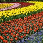 無料で遊ぶ!木曽三川公園センターにチューリップを見に行きました♪