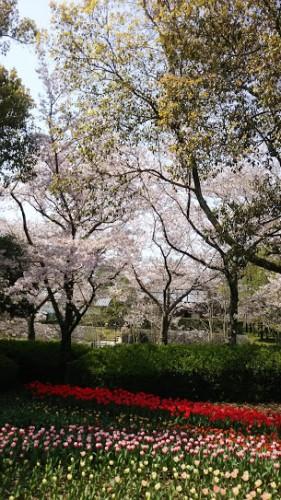 DSC 2000 281x500 無料で遊ぶ!木曽三川公園センターにチューリップを見に行きました♪