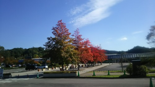 DSC 3745 500x281 花フェスタ記念公園「秋のバラ祭り2017」駐車場情報も♪