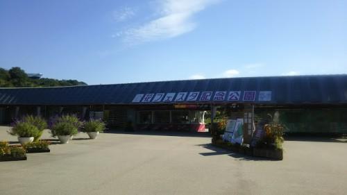 DSC 3747 500x281 花フェスタ記念公園「秋のバラ祭り2017」駐車場情報も♪