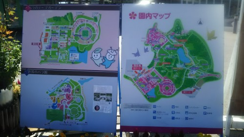 DSC 3748 500x281 花フェスタ記念公園「秋のバラ祭り2017」駐車場情報も♪