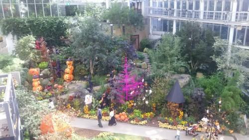 DSC 3758 500x281 花フェスタ記念公園「秋のバラ祭り2017」駐車場情報も♪