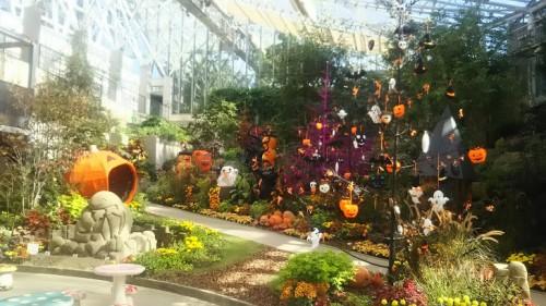 DSC 3760 500x281 花フェスタ記念公園「秋のバラ祭り2017」駐車場情報も♪