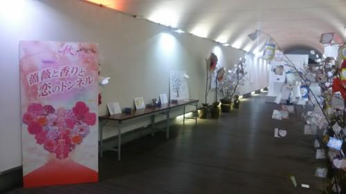 DSC 3764 500x281 花フェスタ記念公園「秋のバラ祭り2017」駐車場情報も♪