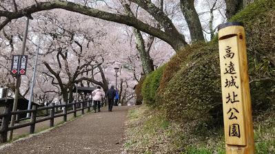 DSC 5108 高遠城址公園の桜が満開で見頃!桜雲橋は夢のよう♡駐車場情報あり