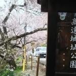 高遠城址公園の桜が満開で見頃!桜雲橋は夢のよう♡駐車場情報あり