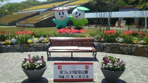 DSC 5261 500x281 4月の花フェスタ記念公園はネモフィラ畑が幻想的☆【画像あり】