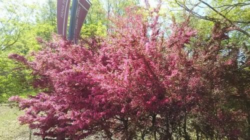 DSC 5273 500x281 4月の花フェスタ記念公園はネモフィラ畑が幻想的☆【画像あり】