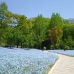 4月の花フェスタ記念公園はネモフィラ畑が幻想的☆【画像あり】