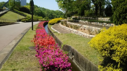 DSC 5289 500x281 4月の花フェスタ記念公園はネモフィラ畑が幻想的☆【画像あり】