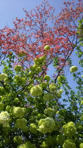 DSC 5290 282x500 4月の花フェスタ記念公園はネモフィラ畑が幻想的☆【画像あり】