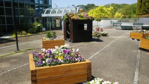 DSC 5291 500x281 4月の花フェスタ記念公園はネモフィラ畑が幻想的☆【画像あり】